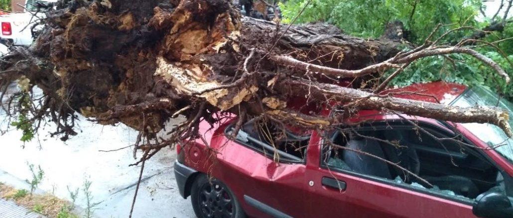 árbol cae sobre carro